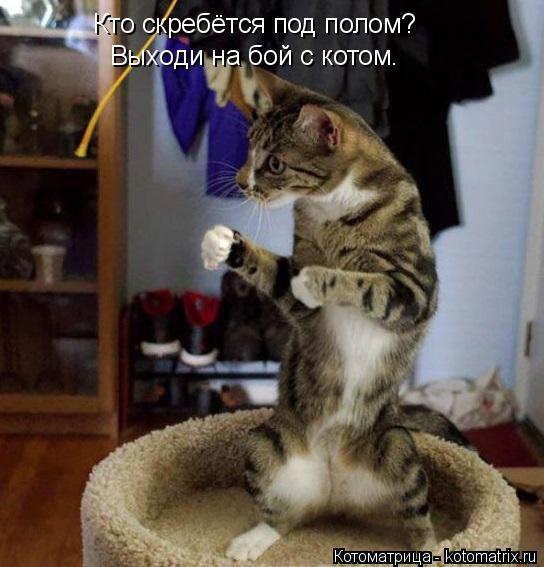 Котоматрица: Кто скребётся под полом? Выходи на бой с котом.