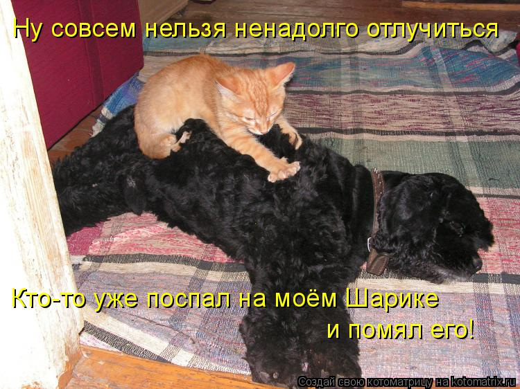 Котоматрица: Ну совсем нельзя ненадолго отлучиться Кто-то уже поспал на моём Шарике  и помял его!