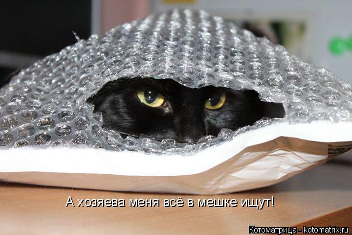 Котоматрица: А хозяева меня всё в мешке ищут!