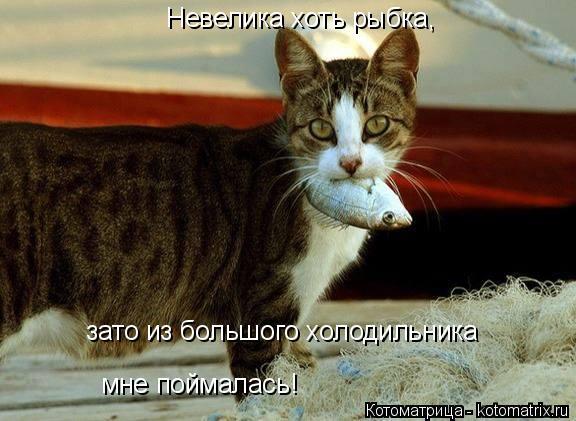 Котоматрица: Невелика хоть рыбка, зато из большого холодильника мне поймалась!