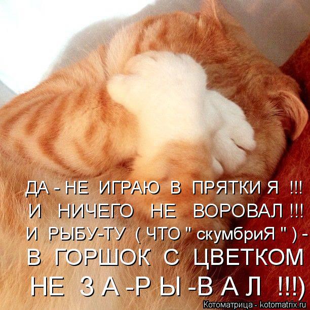 """Котоматрица: ДА - НЕ  ИГРАЮ  В  ПРЯТКИ Я  !!! И   НИЧЕГО   НЕ   ВОРОВАЛ !!! И  РЫБУ-ТУ  ( ЧТО """" скумбриЯ """" ) - В  ГОРШОК  С  ЦВЕТКОМ   НЕ  З А -Р Ы -В А Л  !!!)"""
