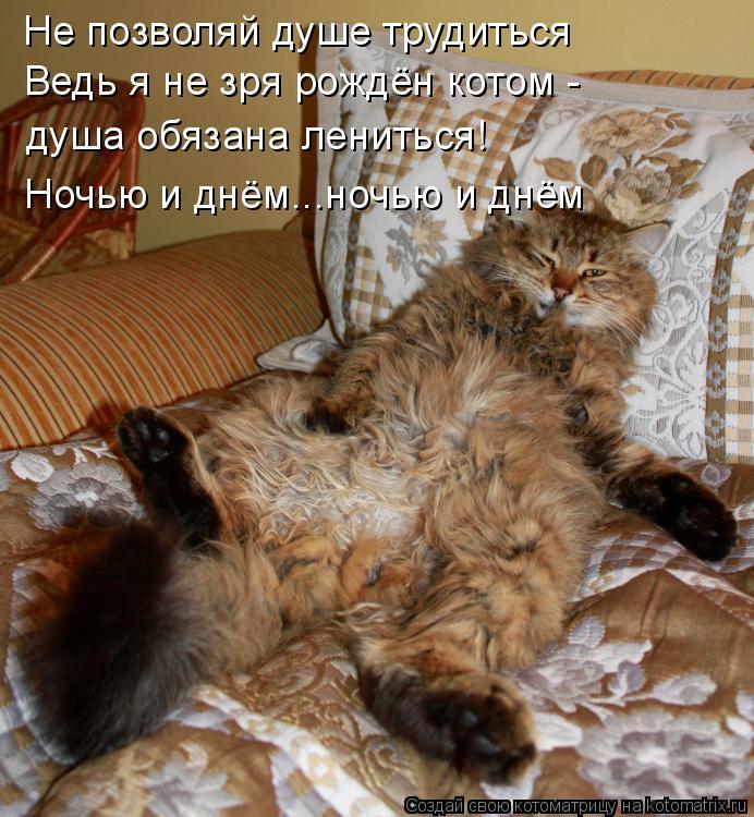 Котоматрица: Не позволяй душе трудиться Ведь я не зря рождён котом - душа обязана лениться! Ночью и днём...ночью и днём