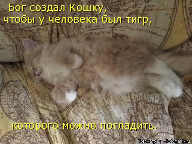 Котоматрица: Бог создал Кошку,  чтобы у человека был тигр,  которого можно погладить.