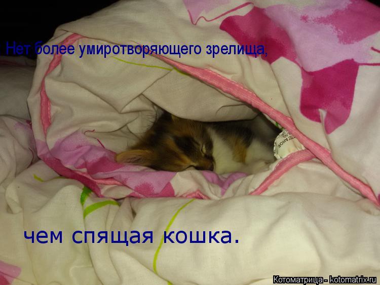 Котоматрица: Нет более умиротворяющего зрелища,   чем спящая кошка.