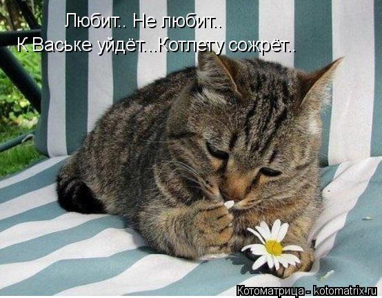 Котоматрица: Любит.. Не любит.. К Ваське уйдёт...Котлету сожрёт..