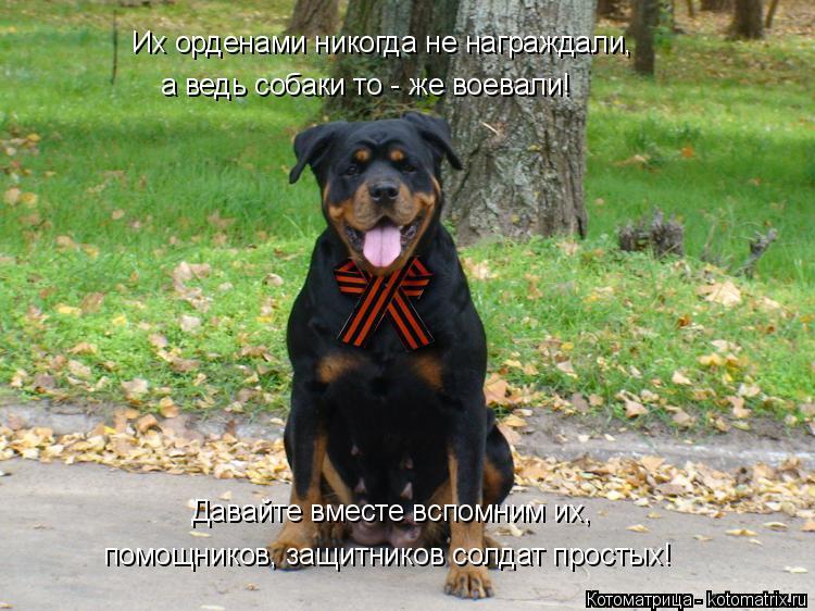 Котоматрица: Их орденами никогда не награждали, а ведь собаки то - же воевали! Давайте вместе вспомним их, помощников, защитников солдат простых!
