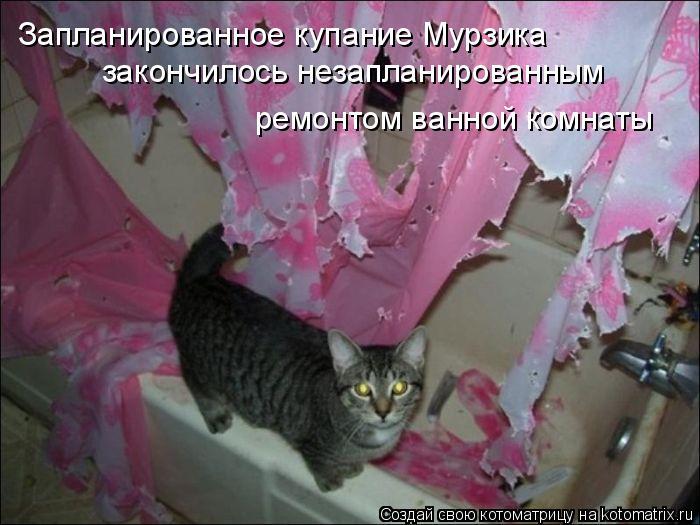 Котоматрица: Запланированное купание Мурзика  закончилось незапланированным  ремонтом ванной комнаты