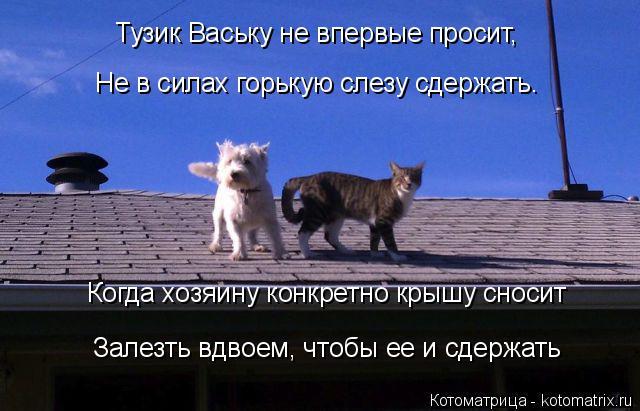 Цитаты про крышу дома