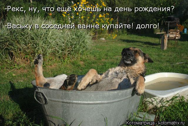 Котоматрица: -Рекс, ну, что ещё хочешь на день рождения? -Ваську в соседней ванне купайте! долго!