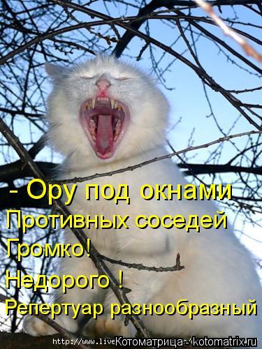 Котоматрица: - Ору под окнами Противных соседей Громко! Недорого ! Репертуар разнообразный
