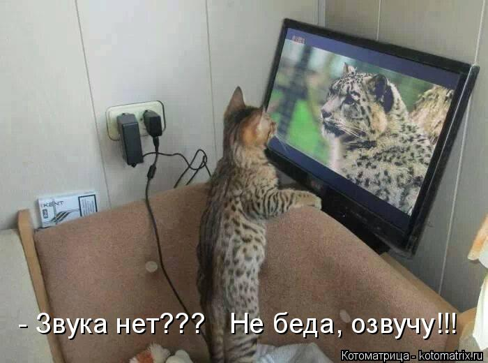 Котоматрица: - Звука нет???   Не беда, озвучу!!!