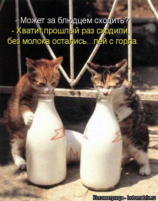 Котоматрица: - Может за блюдцем сходить? - Хватит,прошлый раз сходили, без молока остались...пей с горла.