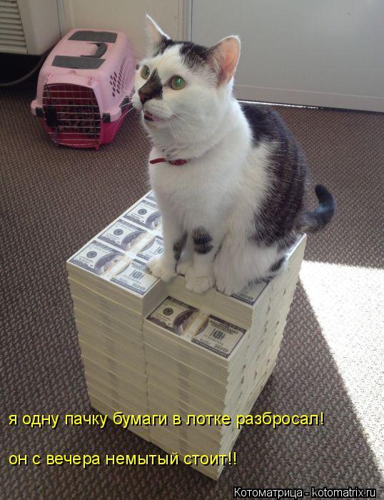 Котоматрица: я одну пачку бумаги в лотке разбросал! он с вечера немытый стоит!!