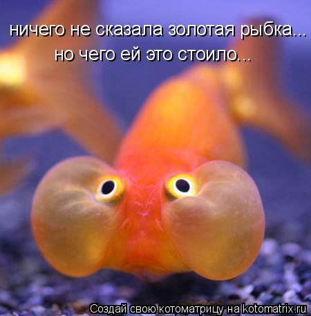 Котоматрица: ничего не сказала золотая рыбка... но чего ей это стоило...