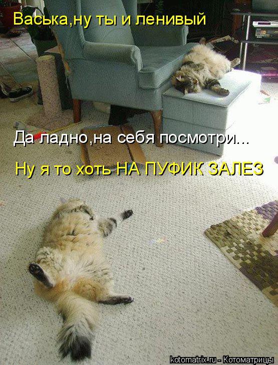 Котоматрица: Васька,ну ты и ленивый Да ладно,на себя посмотри... Ну я то хоть НА ПУФИК ЗАЛЕЗ