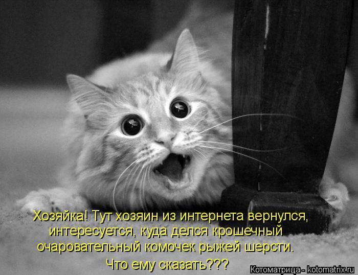 Котоматрица: Хозяйка! Тут хозяин из интернета вернулся, интересуется, куда делся крошечный очаровательный комочек рыжей шерсти. Что ему сказать???