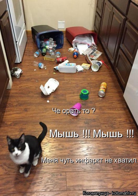 Котоматрица: Че орать то ? Мышь !!! Мышь !!! Меня чуть инфаркт не хватил...