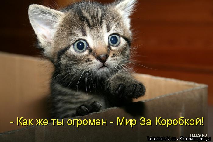 Котоматрица: - Как же ты огромен - Мир За Коробкой!