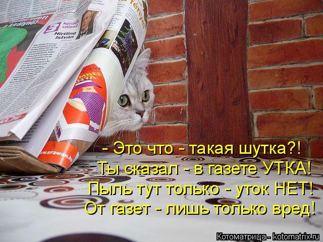 Котоматрица: - Это что - такая шутка?! Ты сказал - в газете УТКА! Пыль тут только - уток НЕТ! От газет - лишь только вред!
