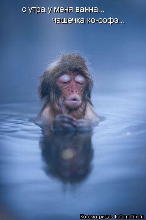 Котоматрица: с утра у меня ванна... чашечка ко-оофэ...