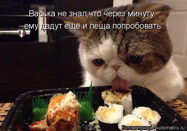 Котоматрица: Васька не знал,что через минуту ему дадут ещё и леща попробовать..