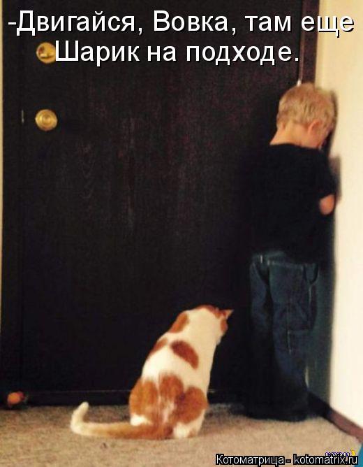 Котоматрица: -Двигайся, Вовка, там еще Шарик на подходе.
