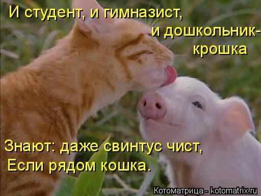 Котоматрица: И студент, и гимназист, и дошкольник- крошка Знают: даже свинтус чист, Если рядом кошка.