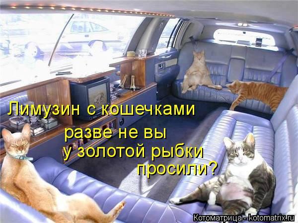 Котоматрица: Лимузин с кошечками  разве не вы у золотой рыбки просили?