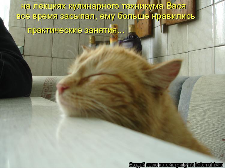 Котоматрица: на лекциях кулинарного техникума Вася  все время засыпал, ему больше нравились практические занятия...
