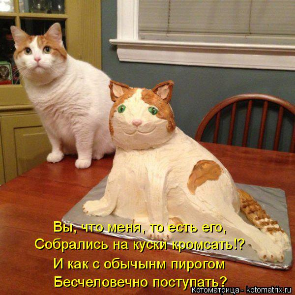 Котоматрица: Собрались на куски кромсать!?  Вы, что меня, то есть его,  И как с обычынм пирогом Бесчеловечно поступать?