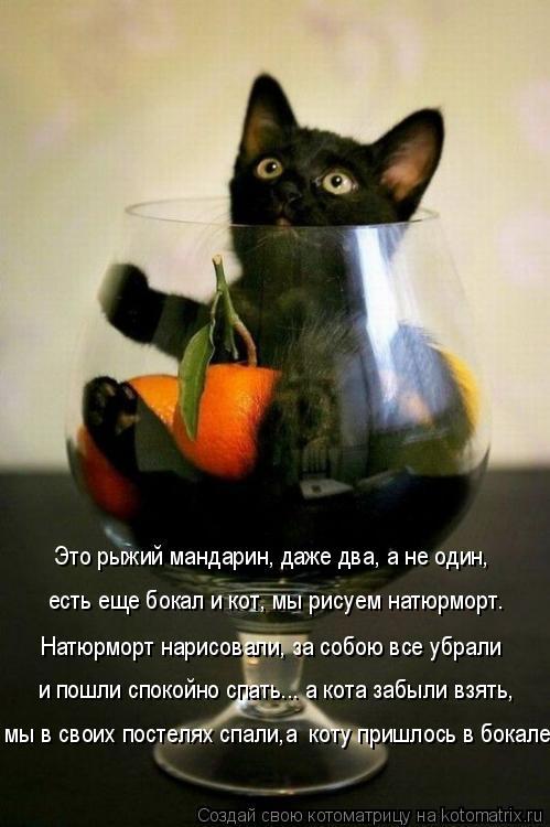 Котоматрица: мы в своих постелях спали,а  коту пришлось в бокале. Натюрморт нарисовали, за собою все убрали и пошли спокойно спать... а кота забыли взять, Э