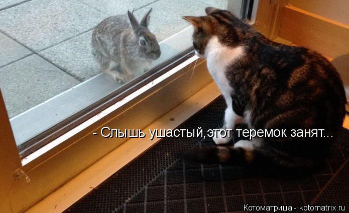 Котоматрица: - Слышь ушастый,этот теремок занят...