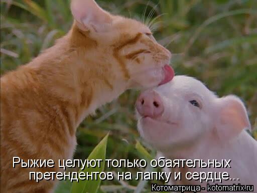 Котоматрица: Рыжие целуют только обаятельных  претендентов на лапку и сердце...