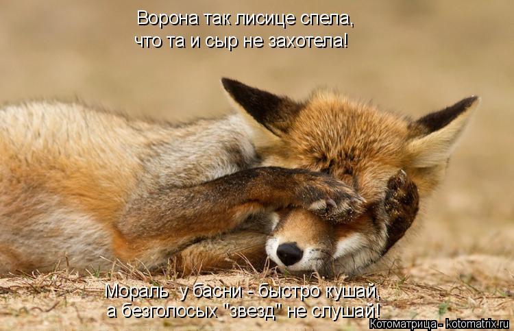 """Котоматрица: Ворона так лисице спела, что та и сыр не захотела! а безголосых """"звезд"""" не слушай! Мораль  у басни - быстро кушай,"""