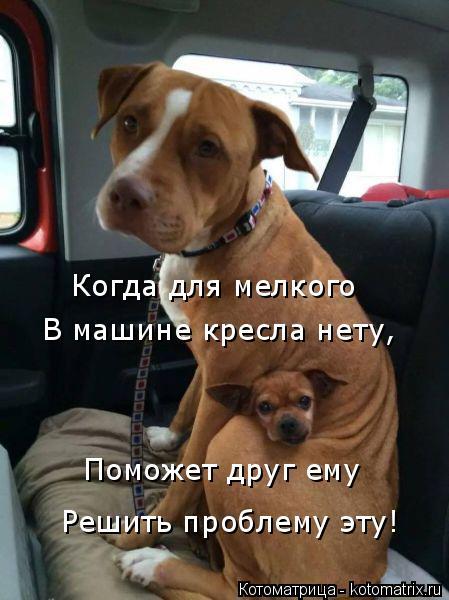 Котоматрица: Когда для мелкого  В машине кресла нету, Поможет друг ему Решить проблему эту!