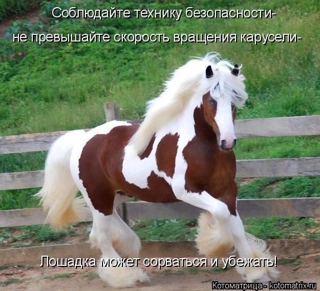 Котоматрица: Соблюдайте технику безопасности- не превышайте скорость вращения карусели- Лошадка может сорваться и убежать!