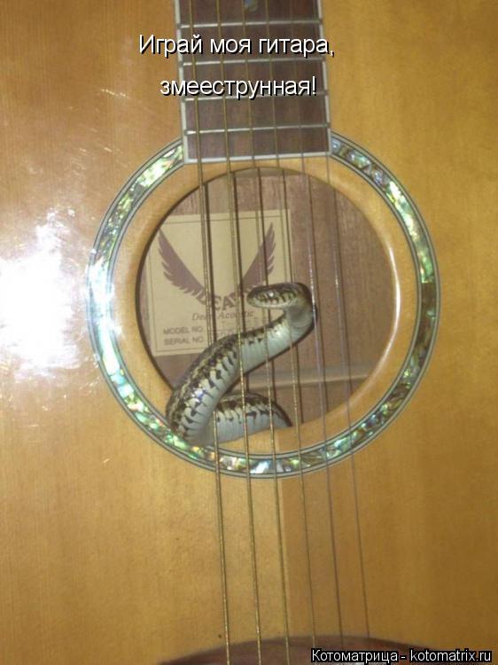 Котоматрица: Играй моя гитара, змееструнная!