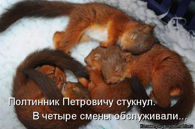Котоматрица: Полтинник Петровичу стукнул. В четыре смены обслуживали...