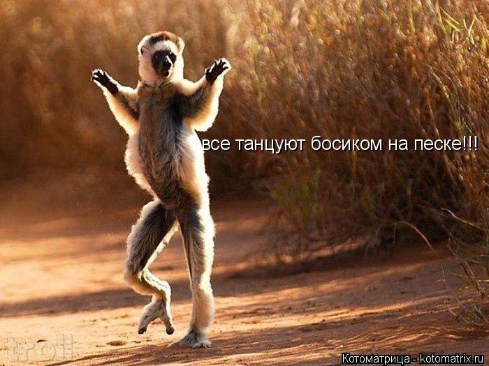 Котоматрица: все танцуют босиком на песке!!!