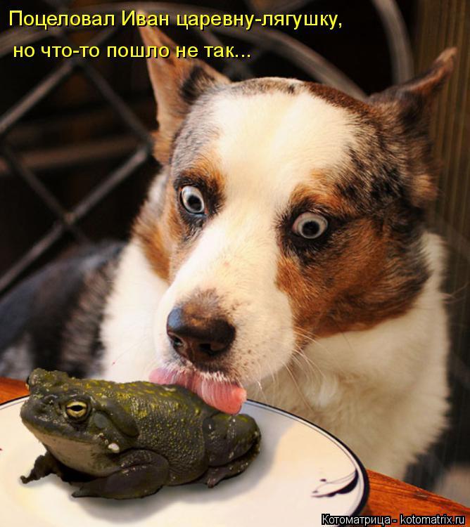 Котоматрица: Поцеловал Иван царевну-лягушку, но что-то пошло не так...