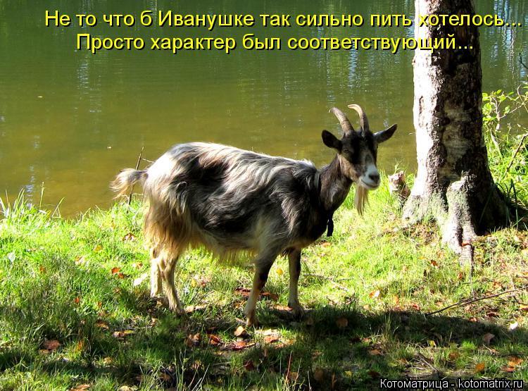 Котоматрица: Не то что б Иванушке так сильно пить хотелось... Просто характер был соответствующий...