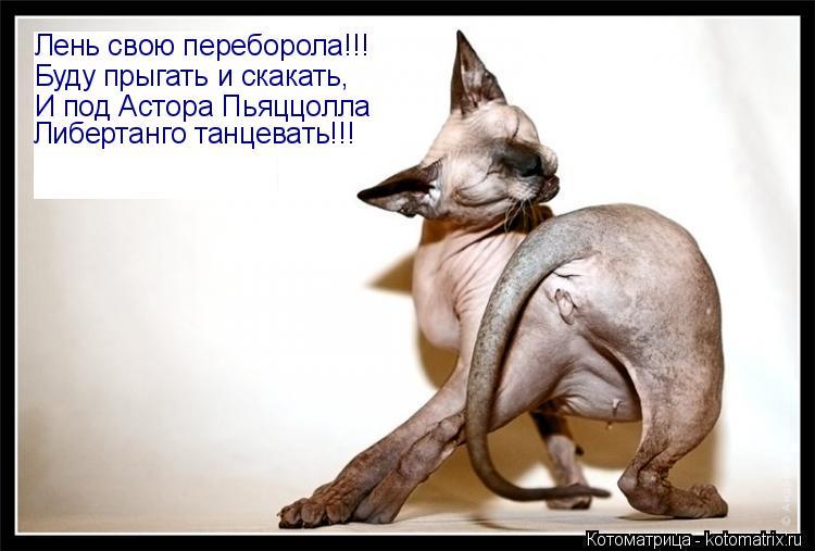 Котоматрица: Лень свою переборола!!! Буду прыгать и скакать, И под Астора Пьяццолла Либертанго танцевать!!!