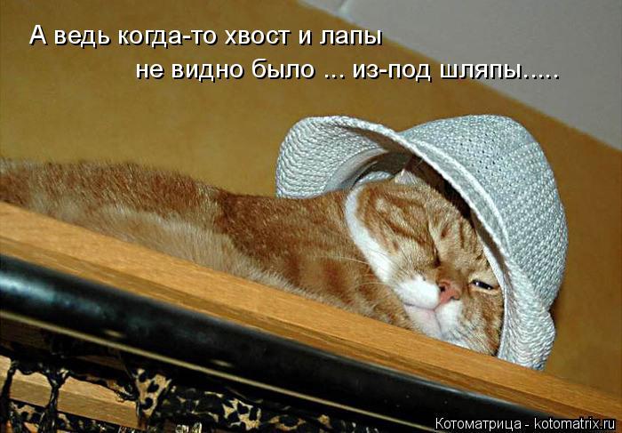 Котоматрица: А ведь когда-то хвост и лапы не видно было ... из-под шляпы.....