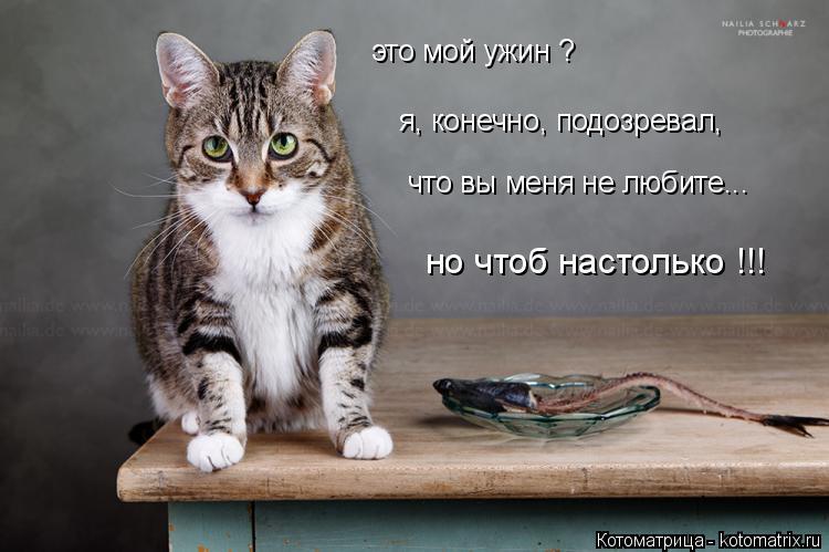 Котоматрица: это мой ужин ? я, конечно, подозревал, что вы меня не любите... но чтоб настолько !!!