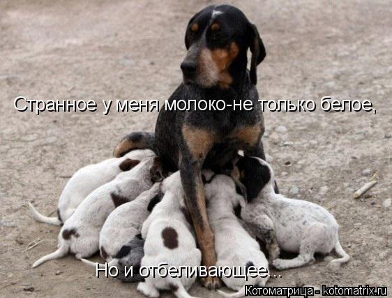 Котоматрица: Странное у меня молоко-не только белое, Но и отбеливающее...