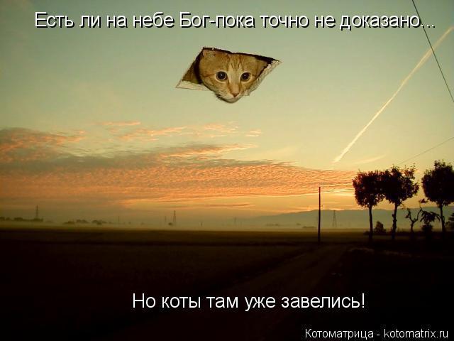 Котоматрица: Есть ли на небе Бог-пока точно не доказано... Но коты там уже завелись!
