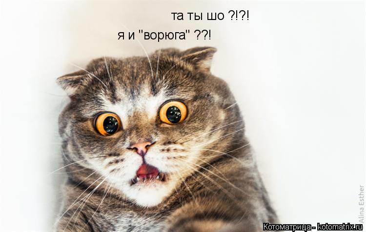 """Котоматрица: та ты шо ?!?! я и """"ворюга"""" ??!"""