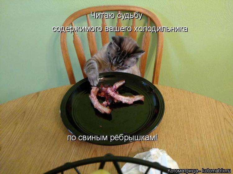 Котоматрица: Читаю судьбу  содержимого вашего холодильника по свиным рёбрышкам!