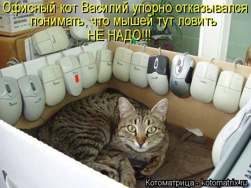 Котоматрица: Офисный кот Василий упорно отказывался  понимать, что мышей тут ловить НЕ НАДО!!!