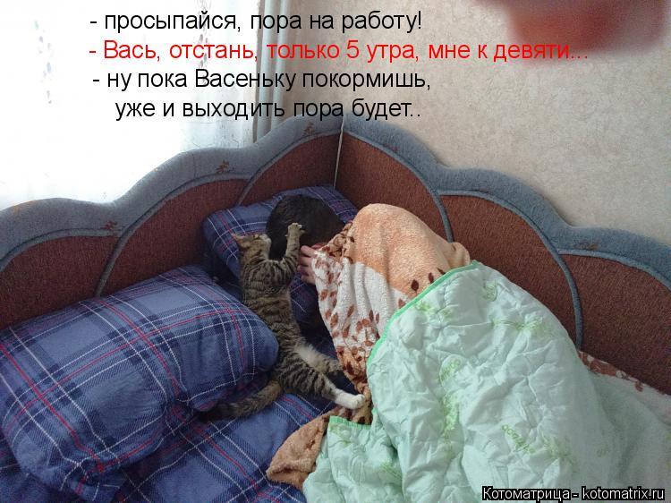 Котоматрица: - просыпайся, пора на работу! - Вась, отстань, только 5 утра, мне к девяти... - ну пока Васеньку покормишь,  уже и выходить пора будет..